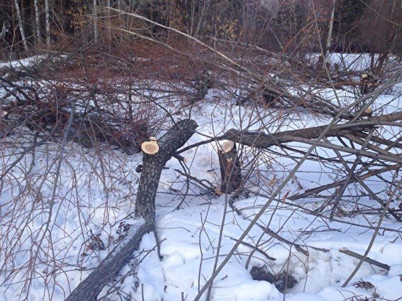 Тефтелев просит возбудить уголовное дело вотношении лиц, вырубивших деревья наЗахаренко