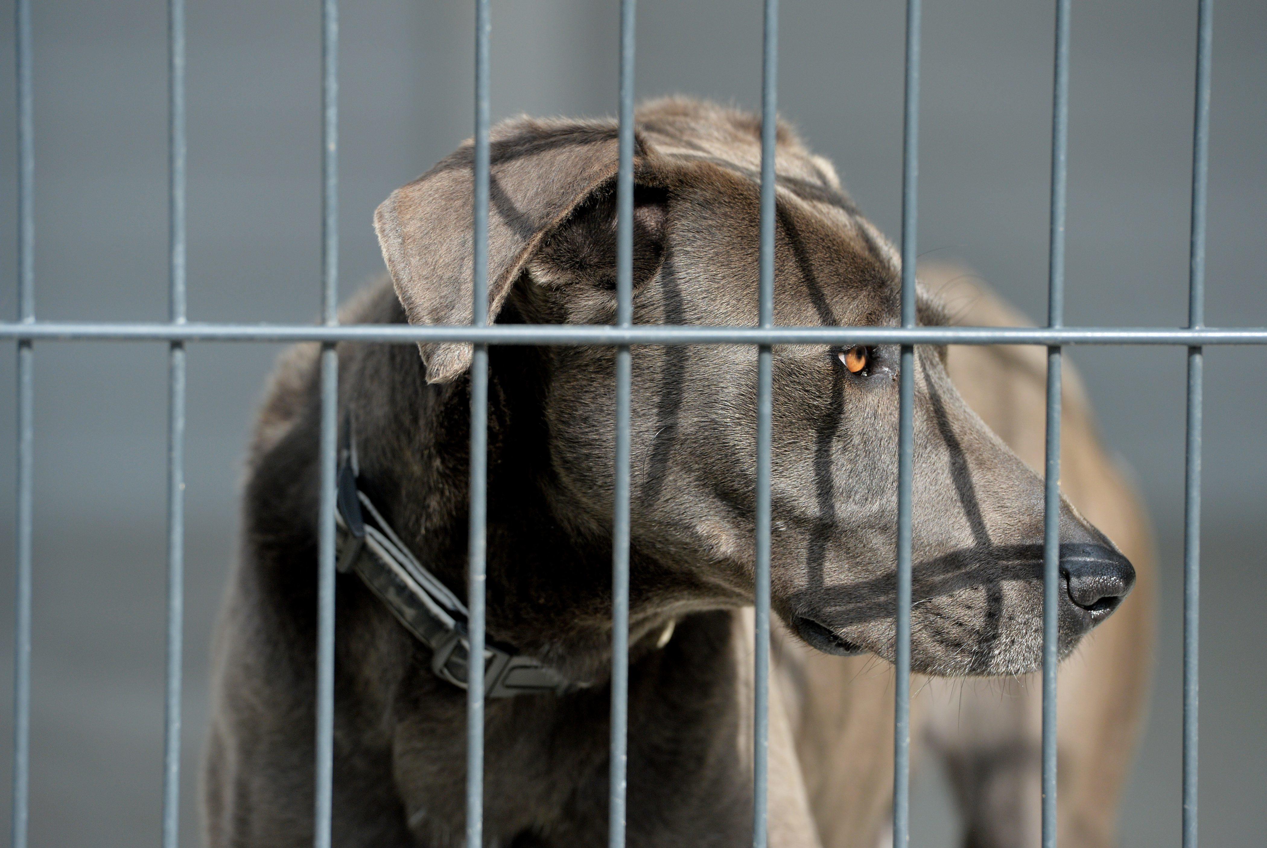 Собачка загрызла владельца впроцессе интервью наглазах у репортеров