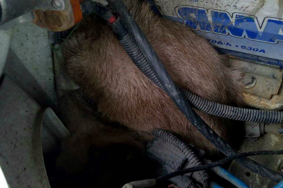 Томский котенок залез вмашину «скорой помощи» идобрался доОмска