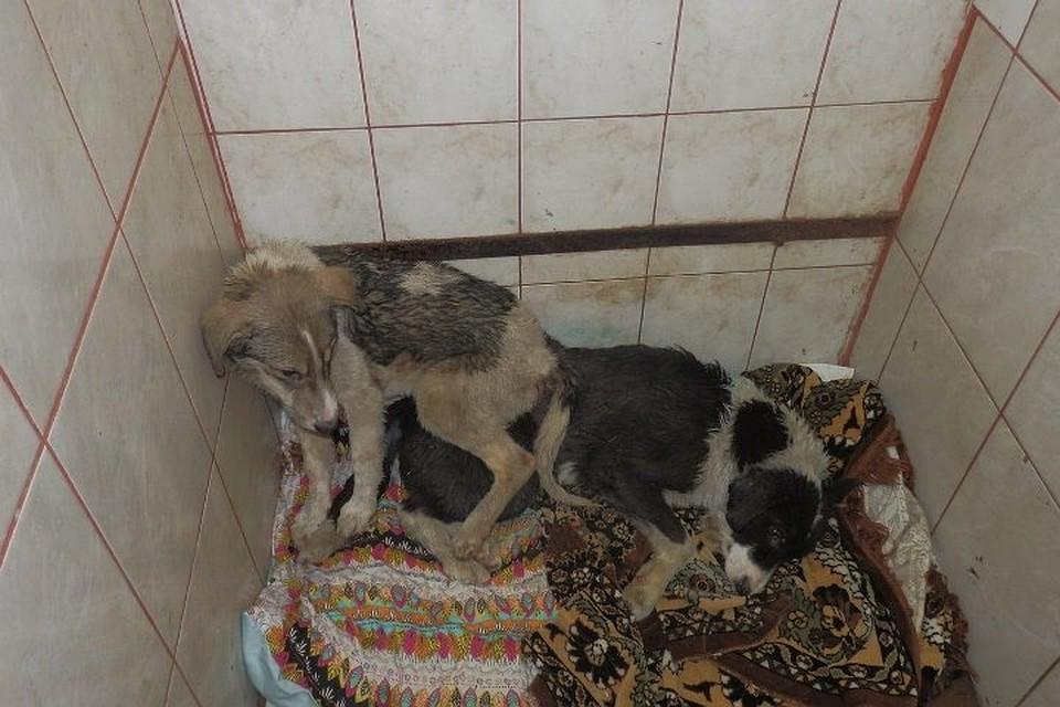 Милиция занялась изучением издевательства над собаками вмуниципальном приюте Перми