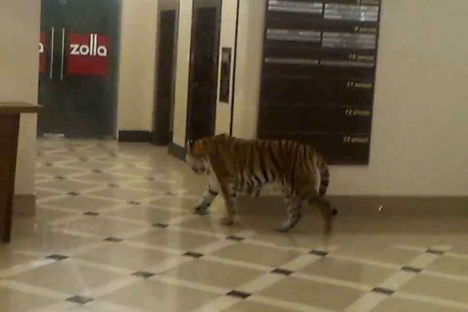 ВХабаровске проверяют видеоролик стигром, гуляющим поторговому центру