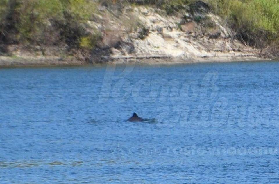 ИзЧерного моря вДон приплыли дельфины