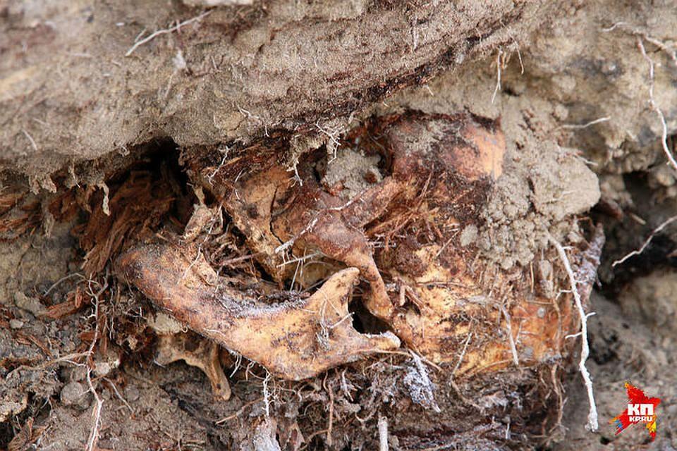 Вканализации наЛенсовета отыскали останки человека