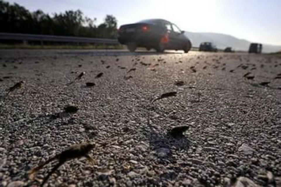 ВПетербурге экологи проведут акцию поспасению серых жаб