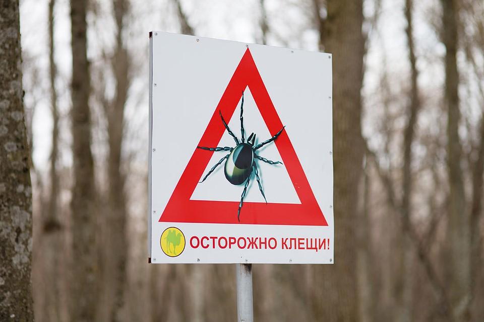 Укушенные клещами люди заболели геморрагической лихорадкой наСтаврополье