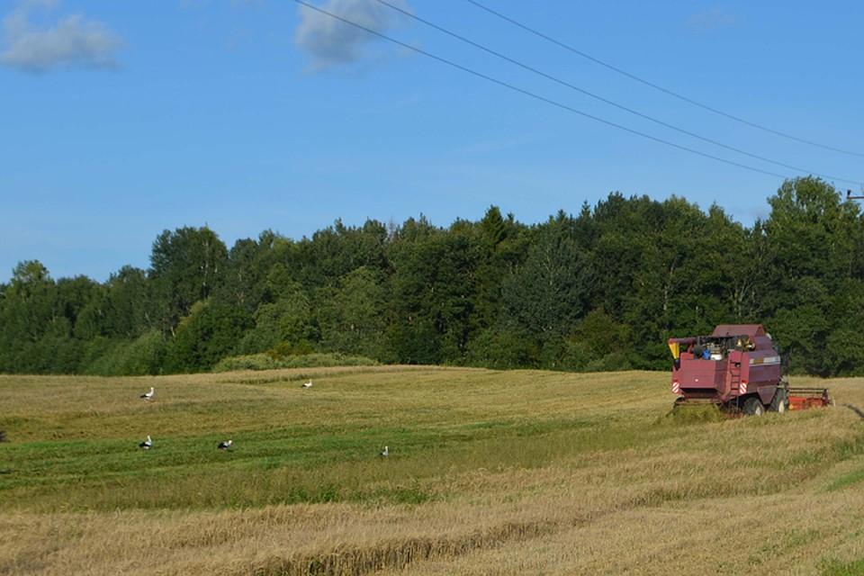 Многодетным фермерам решили дать по300 дальневосточных гектаров