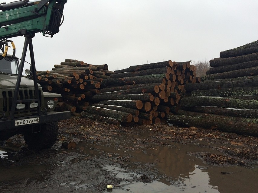 Порубили все дубы… ВВоронежской области осудили 3-х  дровосеков