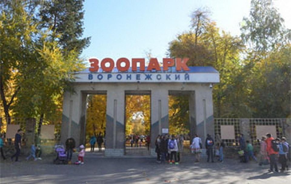 Воронежский зоопарк проводит День открытых дверей