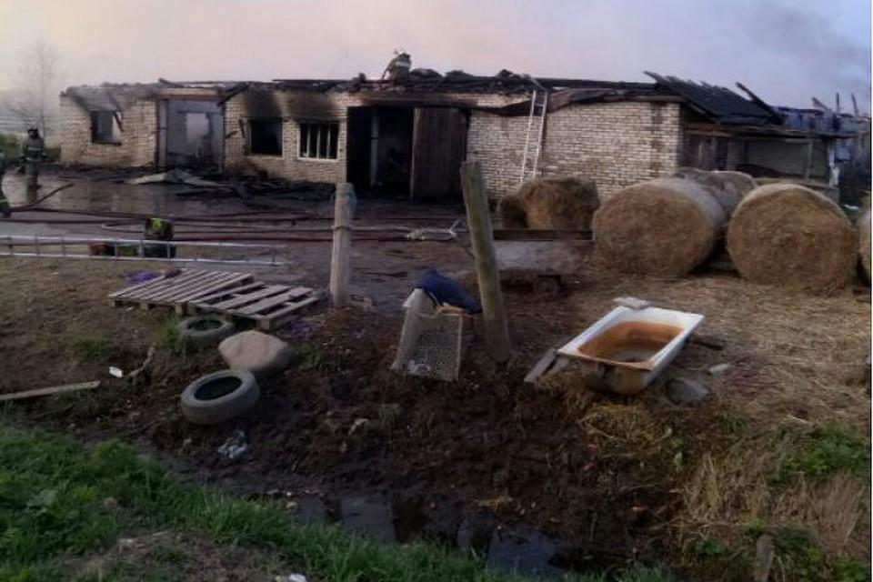 Вконюшне под Петербургом сгорели 26 лошадей