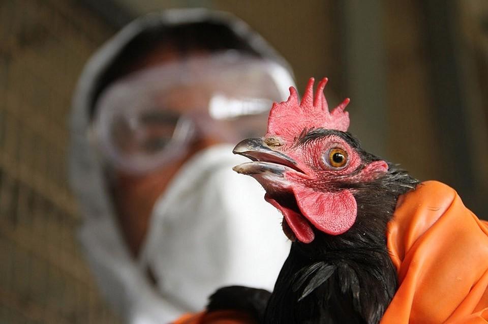 ВКрыму зафиксирован геном птичьего гриппа