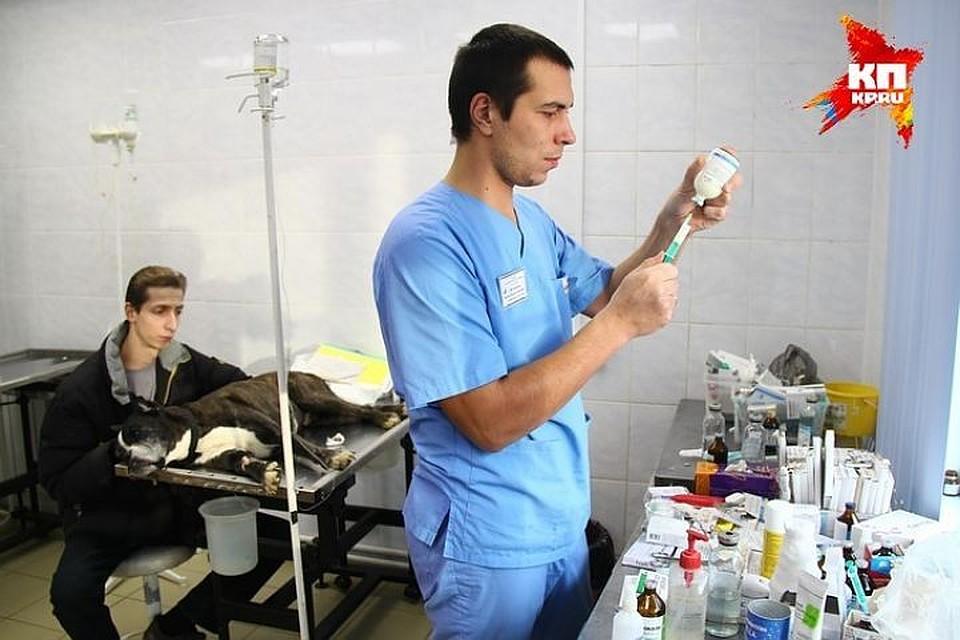 НаЛиговском построят ветеринарный центр за1 млрд руб.