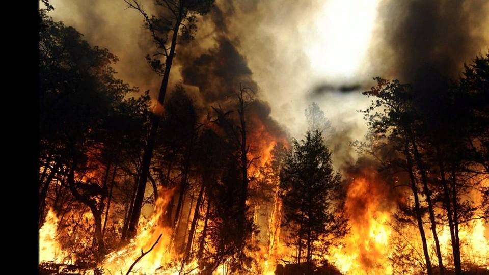 Площадь лесных пожаров на далеком Востоке начала сокращаться