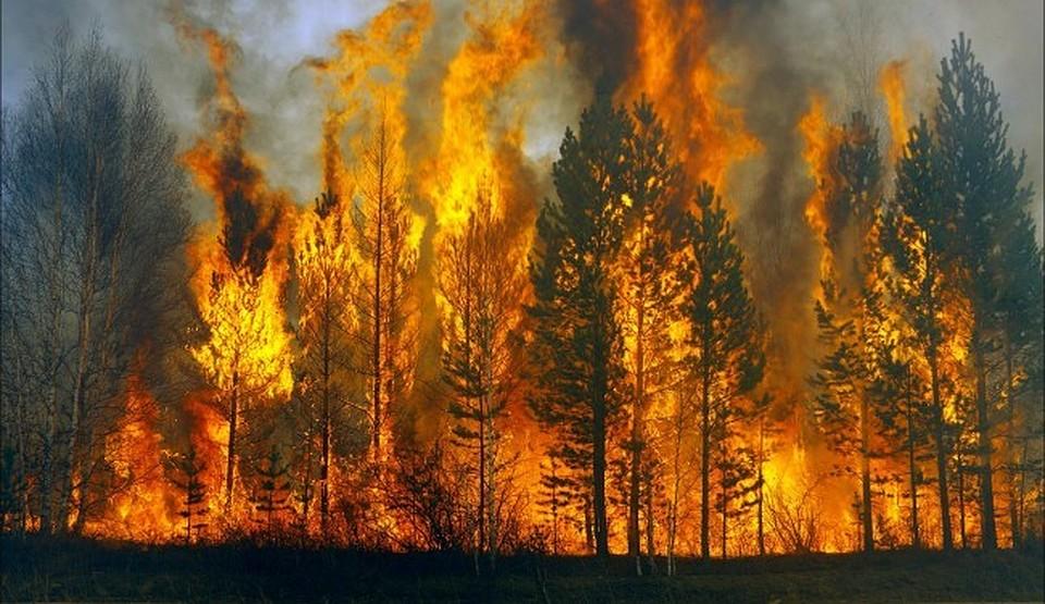 Дожди для тушения природных пожаров вЯкутии искусственно вызовет авиалесохрана
