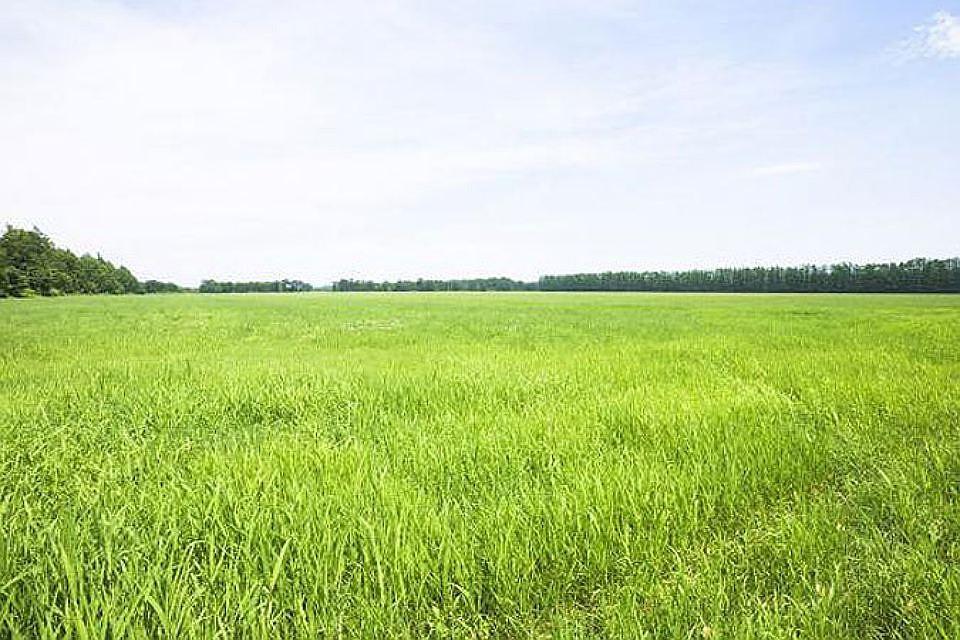 Смольный подарил РПЦ 4,7 тыс. квадратных метров дач вКомарово