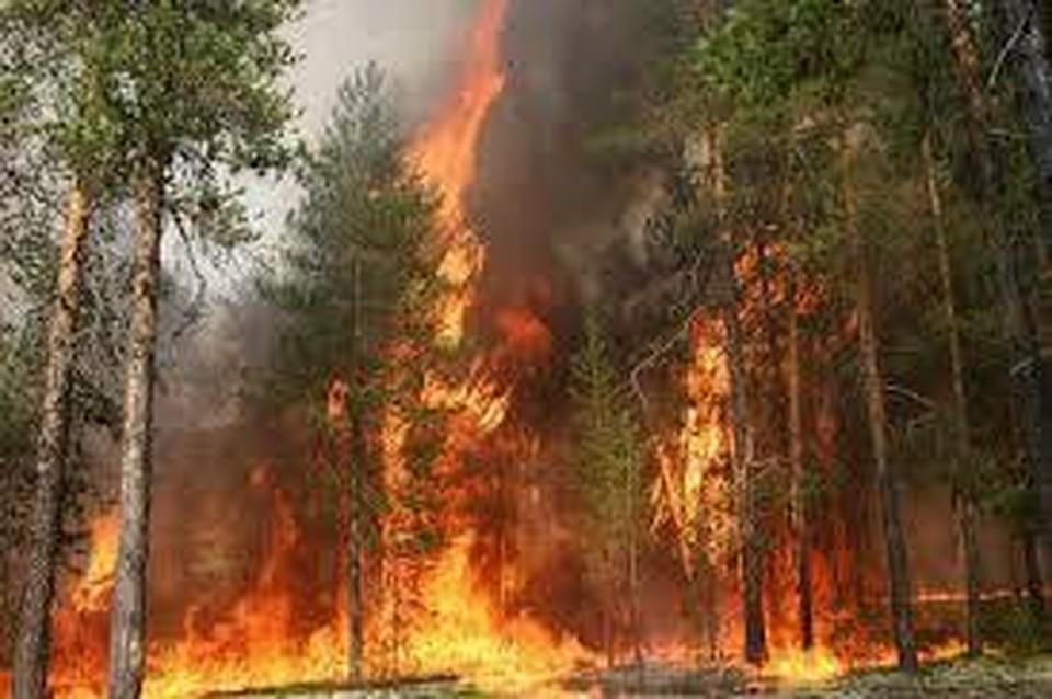 Лесными пожарами вЯкутии охвачена площадь практически  в43 тысячи гектаров