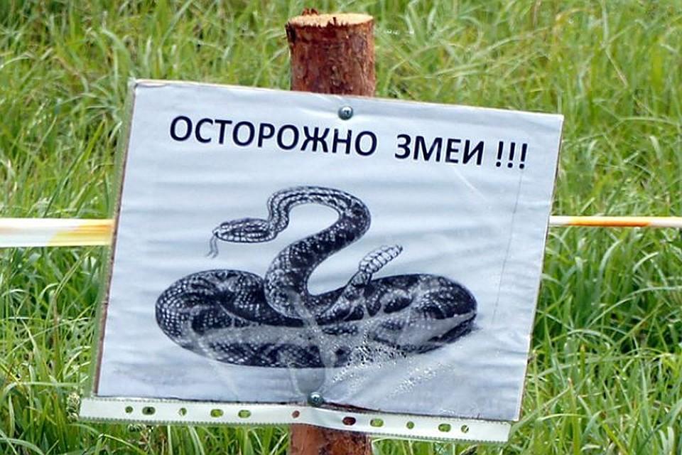 Насеверо-западе столицы словили полуметровую змею