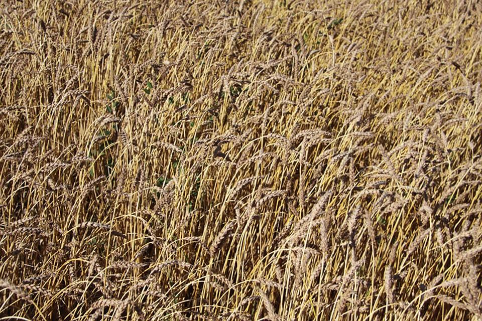 ВТюменской области откроется агроиндустриальный парк