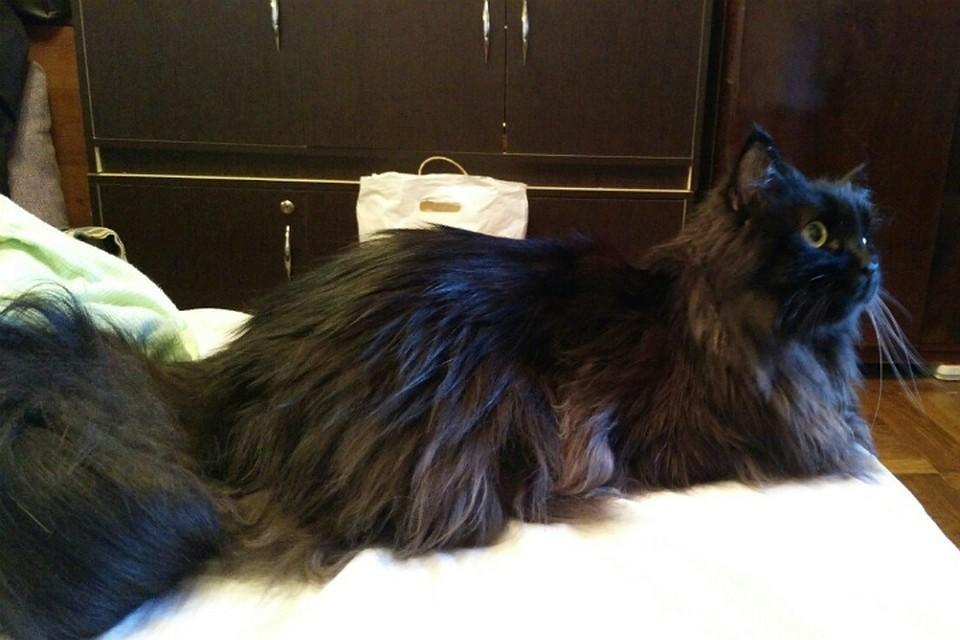 Кота по прозванию «какашечный воин» реализует за млн. находчивый ростовчанин