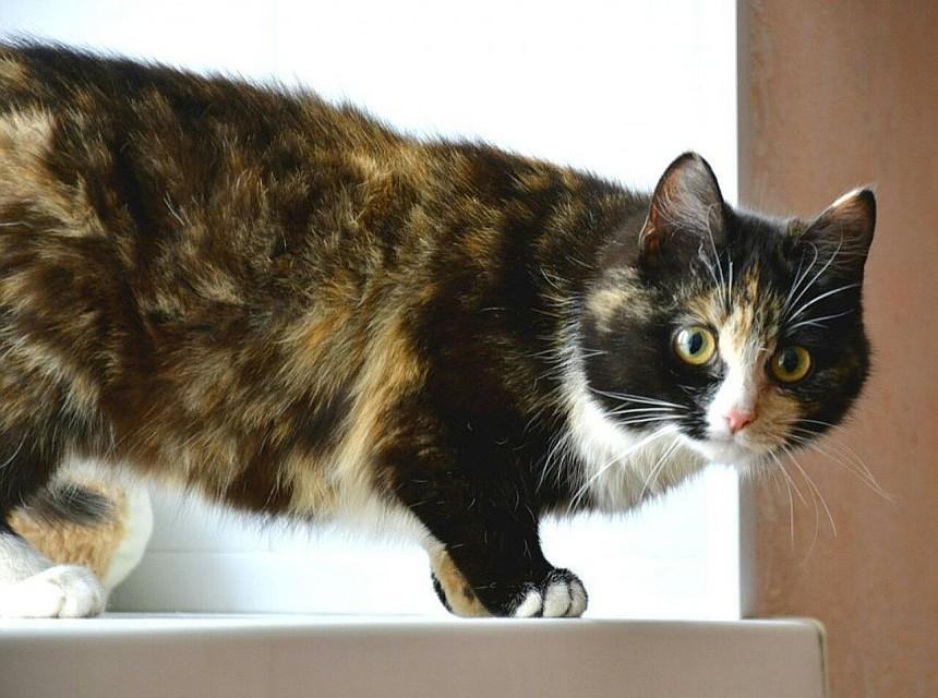 Жителя Октябрьского района осудили заубийство кота