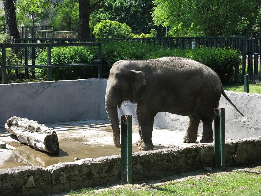 Калининградский зоопарк бесплатно предлагает слоновий навоз