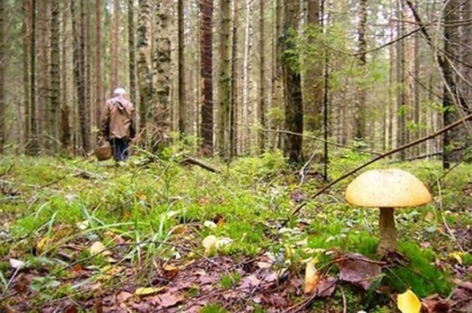 ВТульской области пропавшего грибника отыскали мертвым влесу
