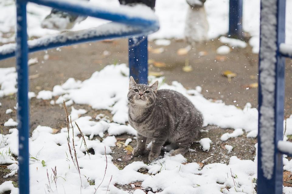 Стало известно, когда вВоронеже выпадет 1-ый снег