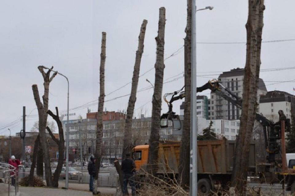 ВТюмени накажут подрядчиков запревращение деревьев встолбы при обрезке