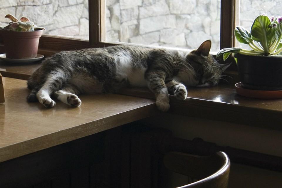 Вгосударстве Украина уличная кошка задушила малыша
