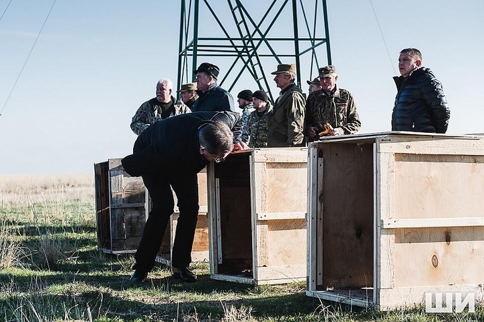 ВАстраханской области начали воссоздавать сайгаков