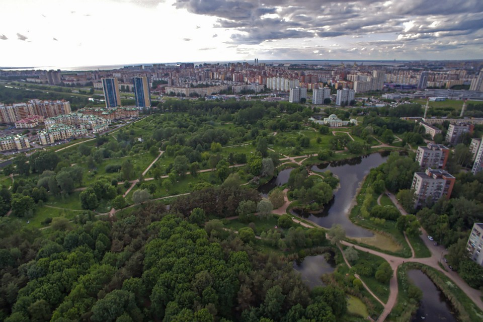 Петербургские градозащитники объединятся для защиты зеленых насаждений