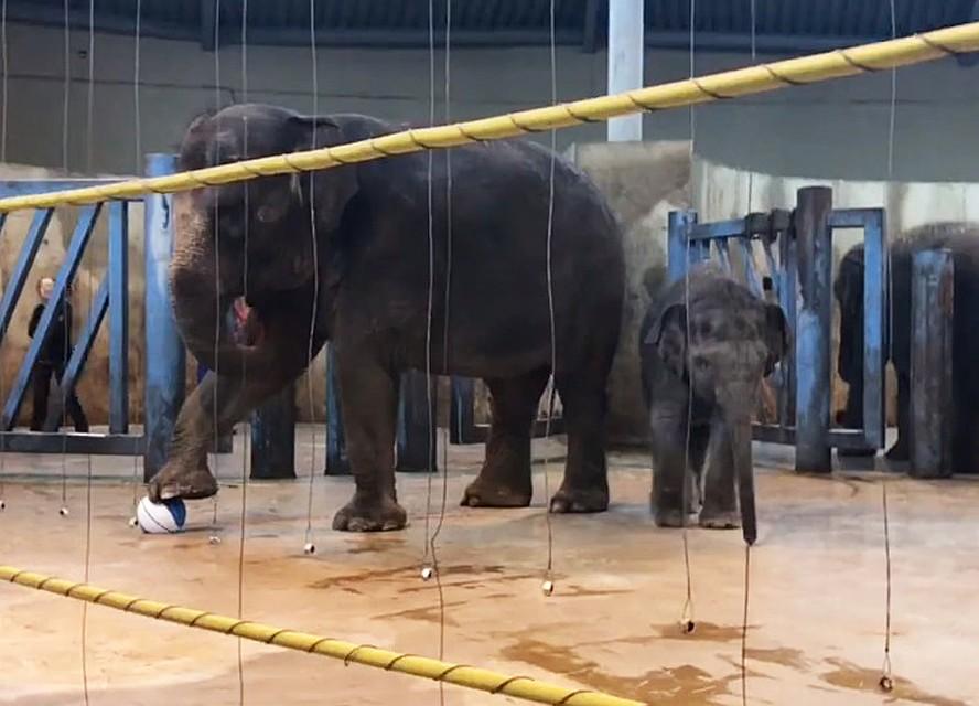 Слоненку изростовского зоопарка исполнился один год