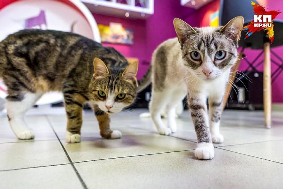 Петербуржец отобрал уприятеля котёнка иполучил уголовное дело