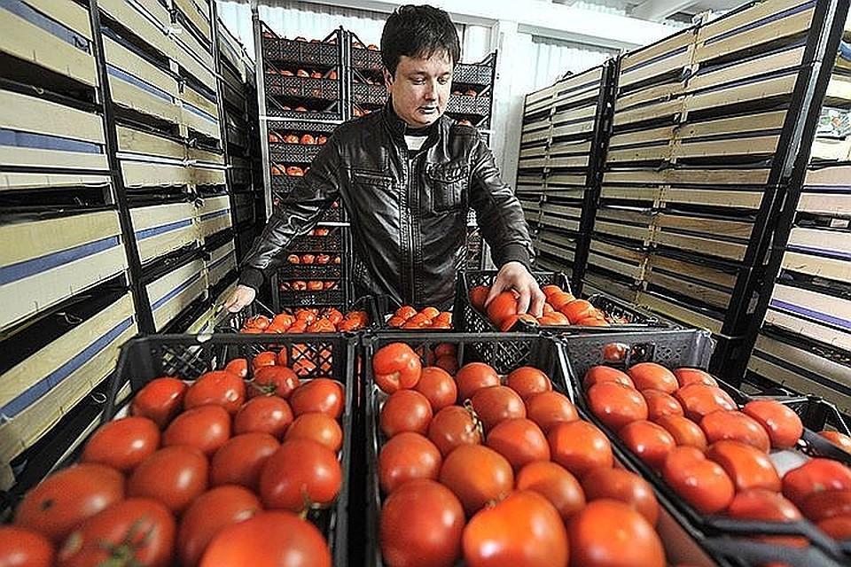 Россельхознадзор может ограничить ввоз помидоров иогурцов изАрмении