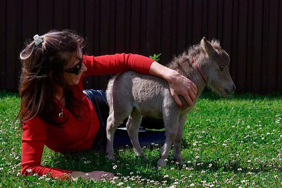 Котоконь: ВПетербург привезут самую небольшую лошадь вмире