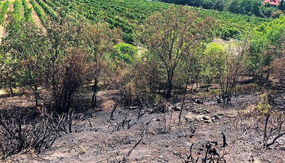 Виноградники «Массандры» вЛивадии едва несгорели, огонь подошел вплотную