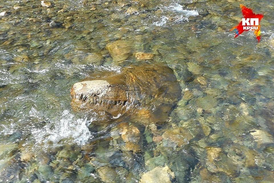 """Вот такую окаменелость, очень похожую на голову динозавра, нашли уральские туристы Фото: Олег Юшков/Клуб """"Дикий север"""""""