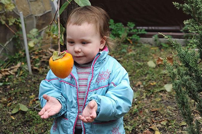 Хурма - вкусный осенний фрукт богат калием и йодом