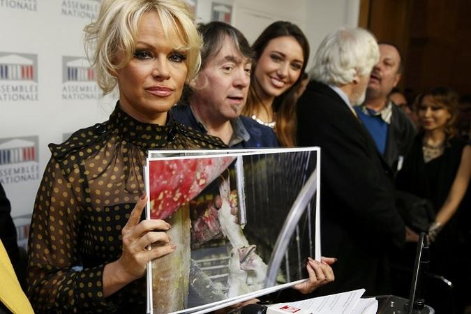 Памела Андерсон на пресс-конференции, приуроченной к кампании по защите уток и гусей
