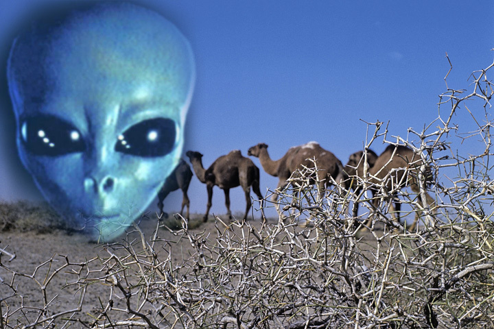 Прилета пришельцев ожидали в пустыне Кызылкум (Узбекистан).