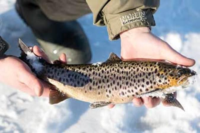 о новом законе о ловле рыбы