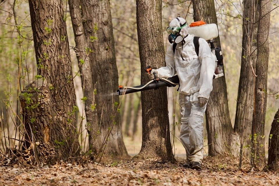 Сейчас в Прикамье ведется активная обработка лесопарковых зон