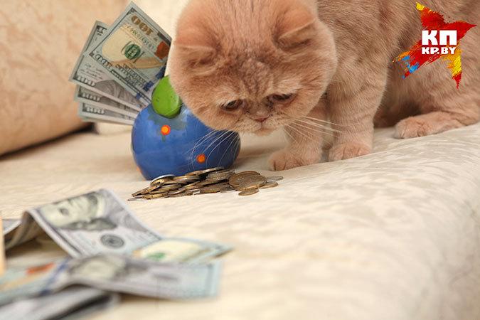 Официальный курс доллара на 15 июня - 20 007 белорусских рублей.