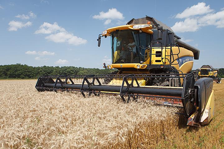 По данным Российского зернового союза, сейчас у нас пшеницу покупают более сотни стран