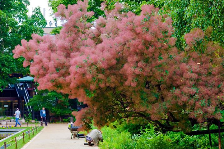 Сотрудники «аптекарского огорода» отмечают, что площадка перед Дымным деревом - излюбленное место для фотосъемок у посетителей