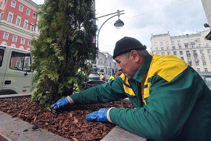 Деревья будут высаживать в грунт, сделают особую систему орошения и защиты корней