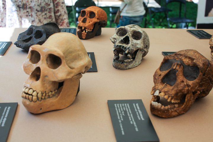 От неандертальцев до искусственного разума