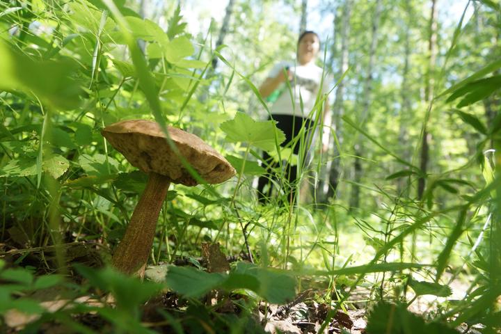 7 случаев клещевого боррелиоза зафиксировано вЛипецкой области