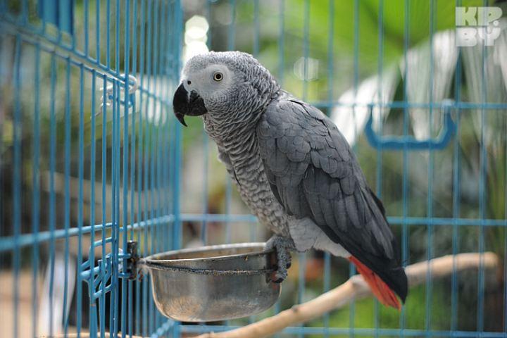 ВПерми третьи сутки ищут сбежавшего иззоопарка попугая