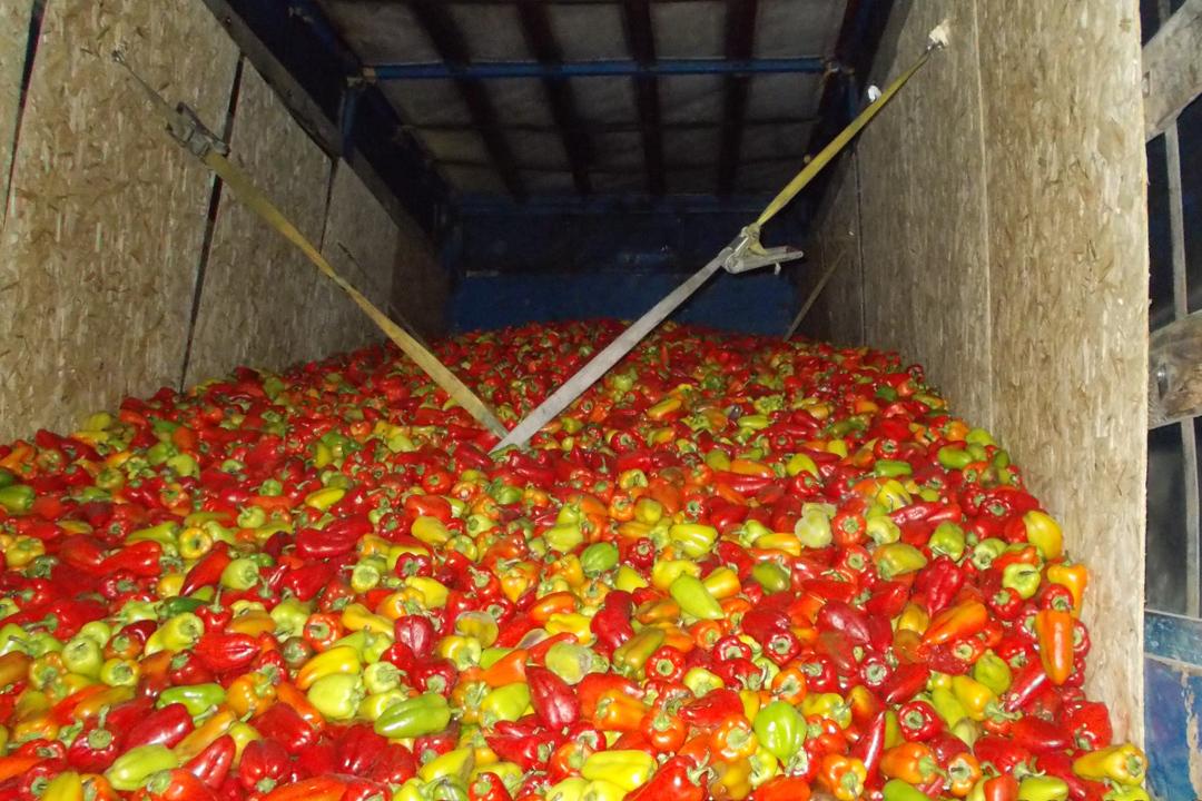 Партию перца весом 20 тонн непропустили вАлтайский край