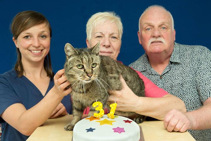 Хозяева Натмега - Лиз и Иэн Финли - души в старичке не чаят Фото: Westway Veterinary Group